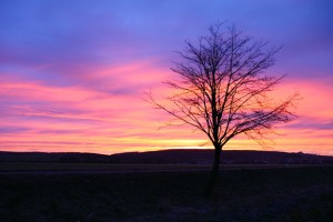 http://www.publicdomainpictures.net/view-image.php?image=1651&picture=morning-sun
