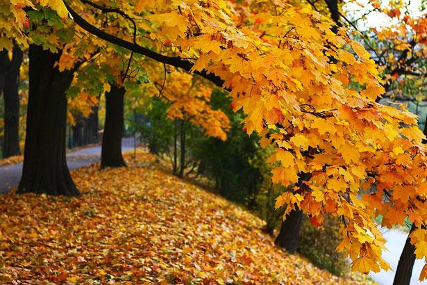 http://www.publicdomainpictures.net/view-image.php?image=17972&picture=autumn-smiling
