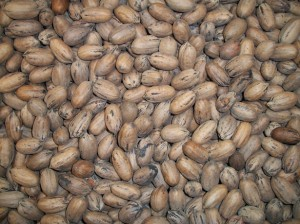 http://www.publicdomainpictures.net/view-image.php?image=10258&picture=nuts