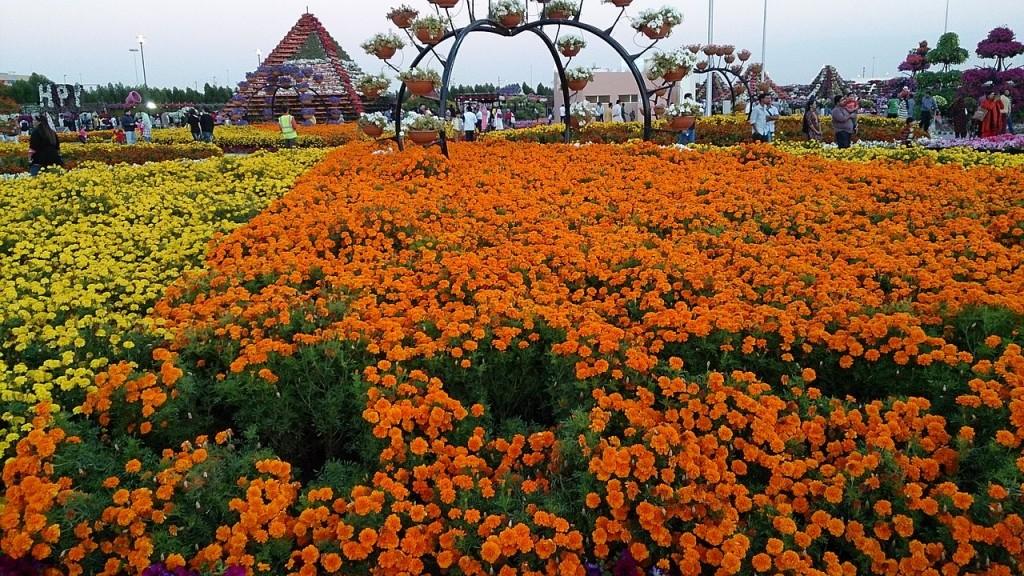 Dubai_Miracle_Garden_2