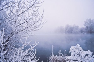 http://www.publicdomainpictures.net/view-image.php?image=18331&picture=winter-fog