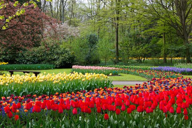 http://publicdomainpictures.net/view-image.php?image=16377&picture=at-keukenhof-gardens