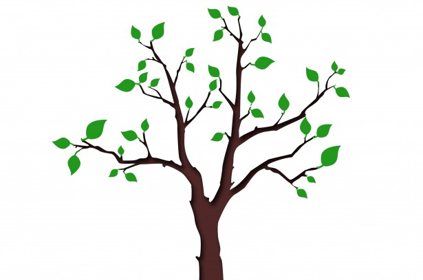 http://www.publicdomainpictures.net/view-image.php?image=43500&picture=tree-with-green-leafage