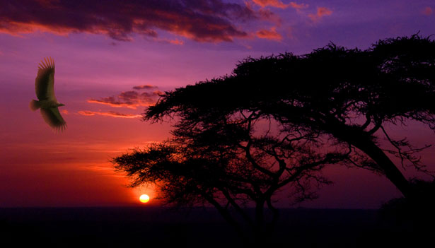 http://www.publicdomainpictures.net/view-image.php?image=576&picture=sunset-in-serengeti
