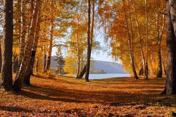 http://www.publicdomainpictures.net/view-image.php?image=26775&picture=autumn-forest
