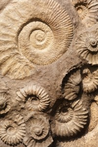 http://www.publicdomainpictures.net/view-image.php?image=47235&picture=shell-fossils