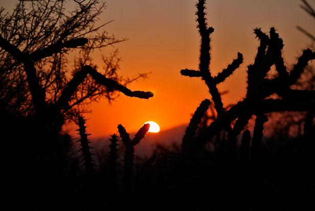 http://www.publicdomainpictures.net/view-image.php?image=25199&picture=cactus-sunrise