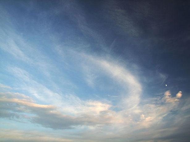 http://www.publicdomainpictures.net/view-image.php?image=886&picture=phoenix