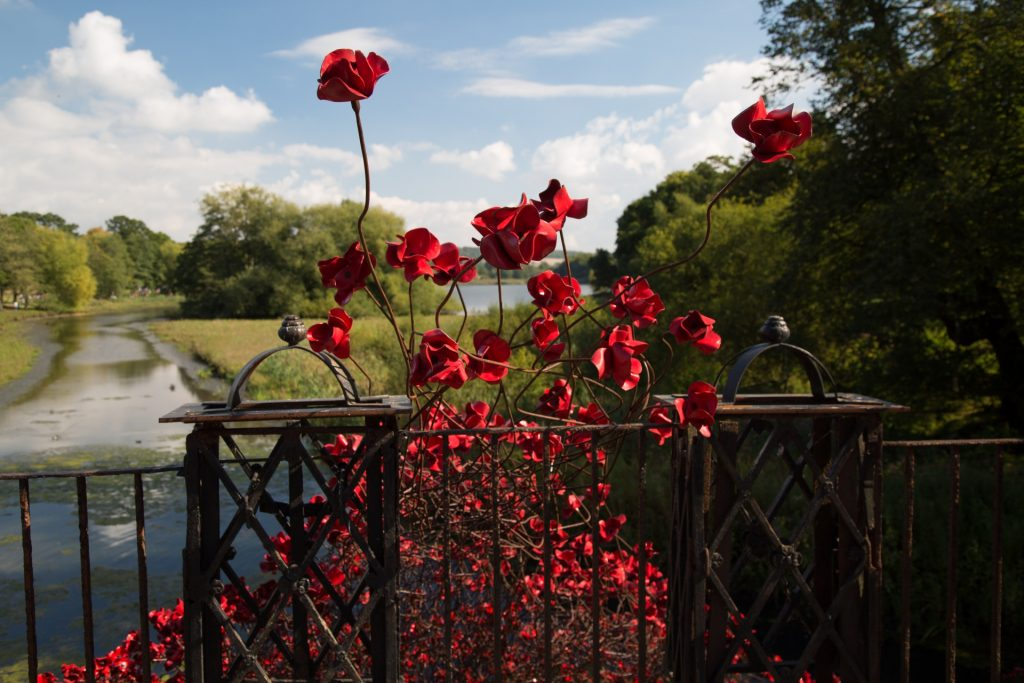 http://www.publicdomainpictures.net/view-image.php?image=173395&picture=remembrance-red-poppies