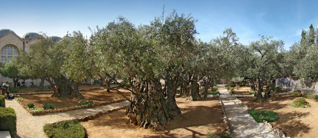 https://en.wikipedia.org/wiki/Gethsemane#/media/File:Jerusalem_Gethsemane_tango7174.jpg