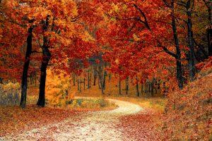https://www.publicdomainpictures.net/en/view-image.php?image=213234&picture=autumn-colors