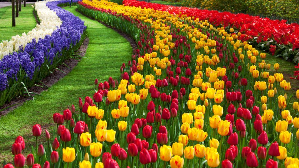 https://www.publicdomainpictures.net/en/view-image.php?image=14630&picture=tulip-flower-garden