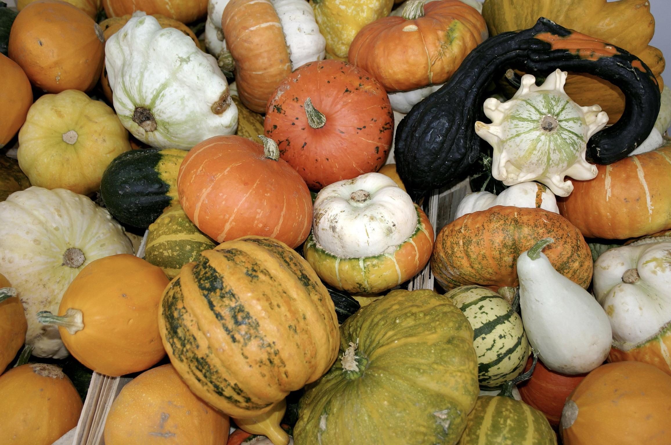 https://commons.wikimedia.org/wiki/Category:Autumn#/media/File:-_Pumpkins_-.jpg
